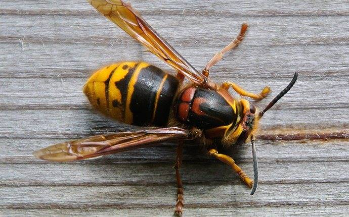 a yellow jacket on a twin falls picnic table