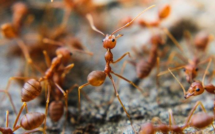 fire ants crawling around in hidden springs ID