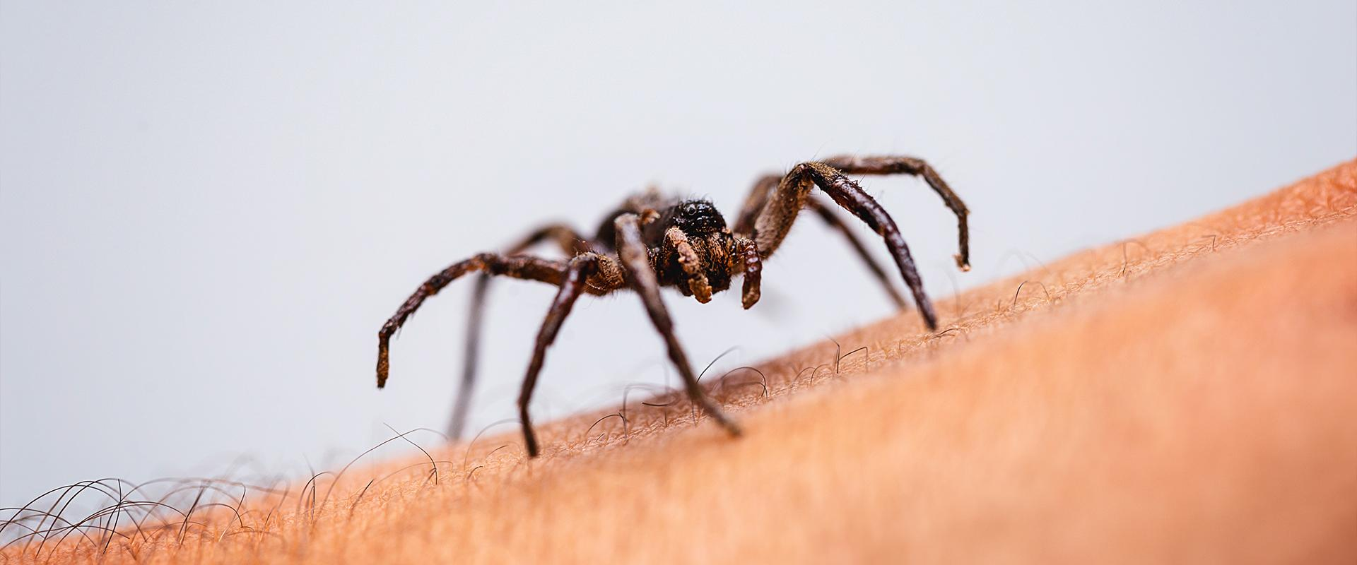 spider on a persons arm in meridian idaho