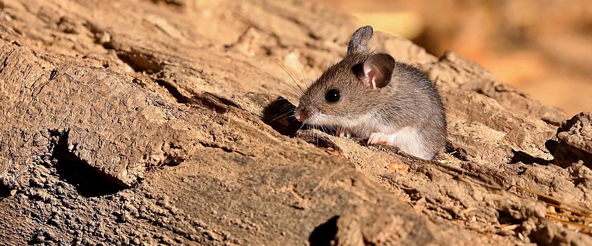 a mouse outside in meridian idaho