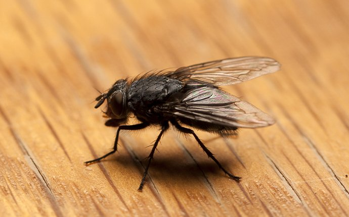 a house fly on a table in meridian idaho
