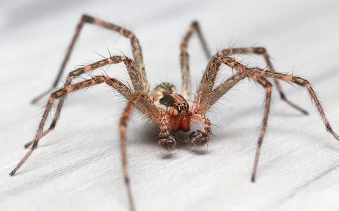 spider in garden city id