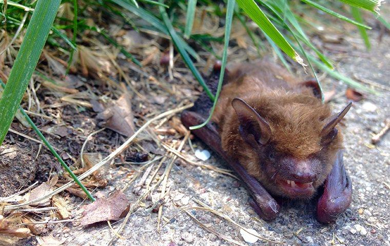 a bat on an ithica walkway