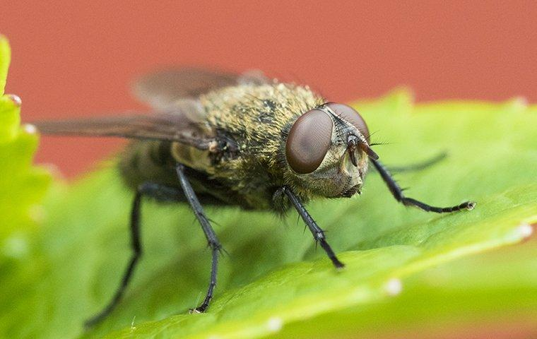 a cluster fly perched on a house plant leaf
