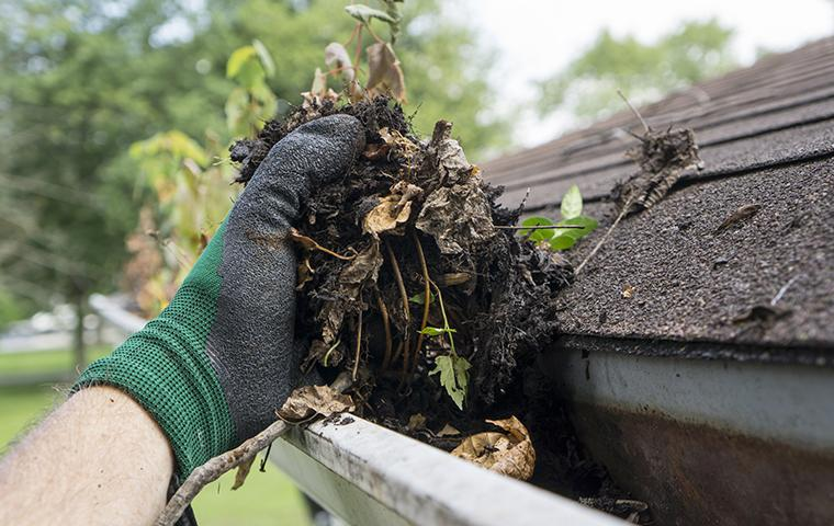 cleaning gutters in summer