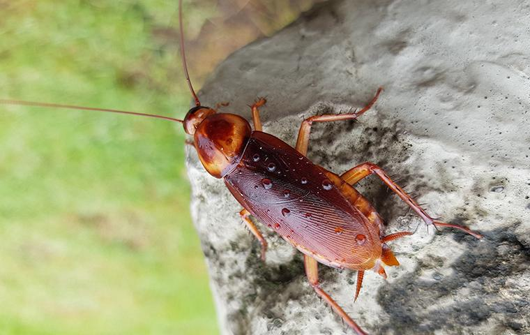 a cockroach on a rock
