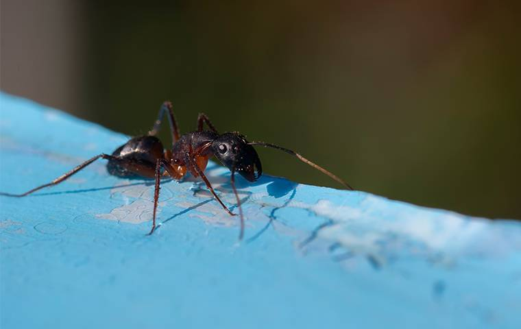 an ant on a piece of blue painted wood