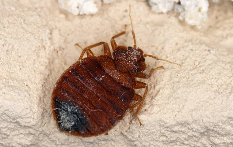 bed bug on a wall