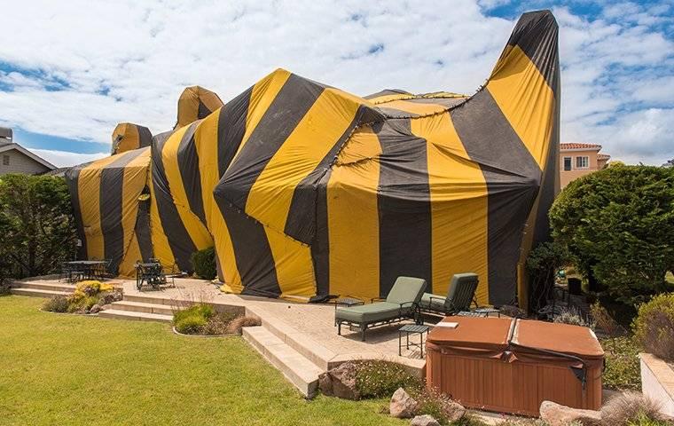 fumigation tent around florida home