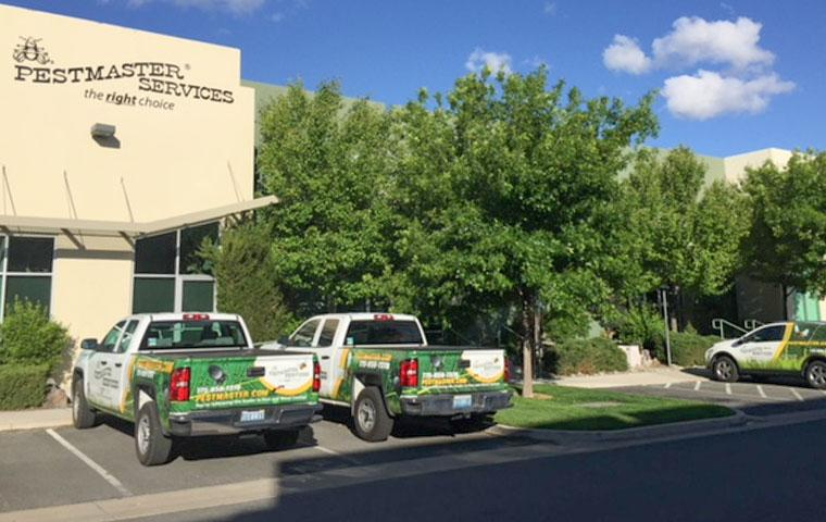 a parking lot with pestmaster services vehicles in it