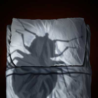 silhouette shadow of bed bug on pillow