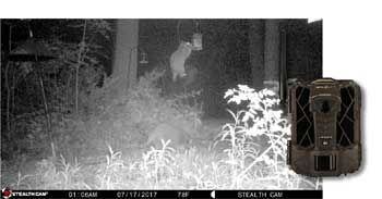trail cam image of raccoon in bird feeder