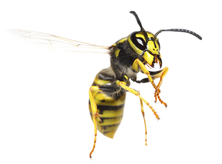 yellow jacket on white background