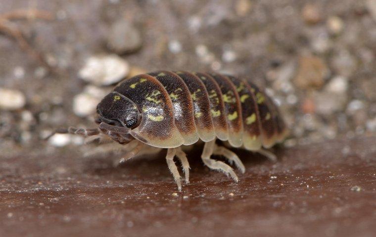 pill bug outside home