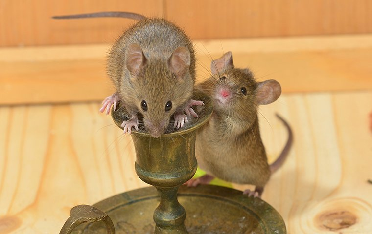 little house mice on a candle stick