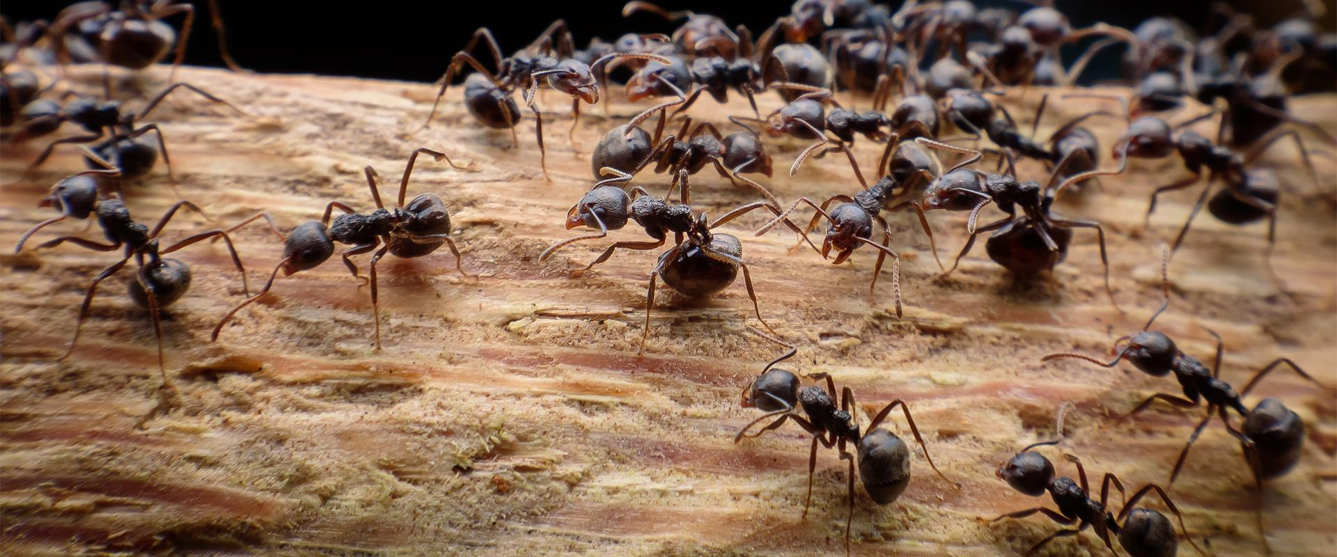 close up of ants on a log