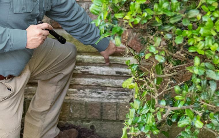 a pest technician inspecting