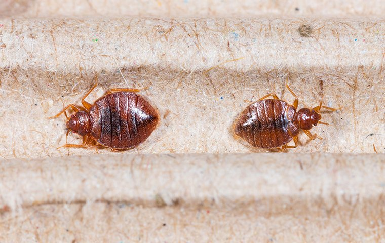 a bed bug inside of a home