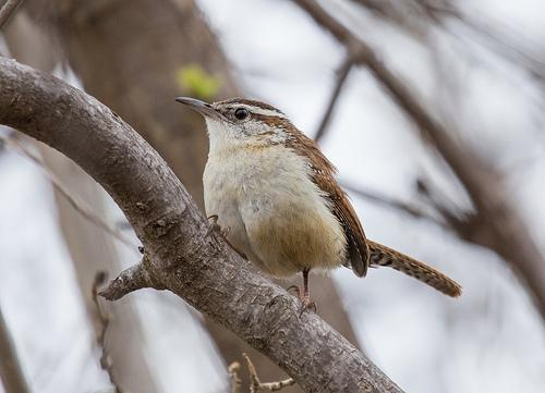 Top Trails For Birding