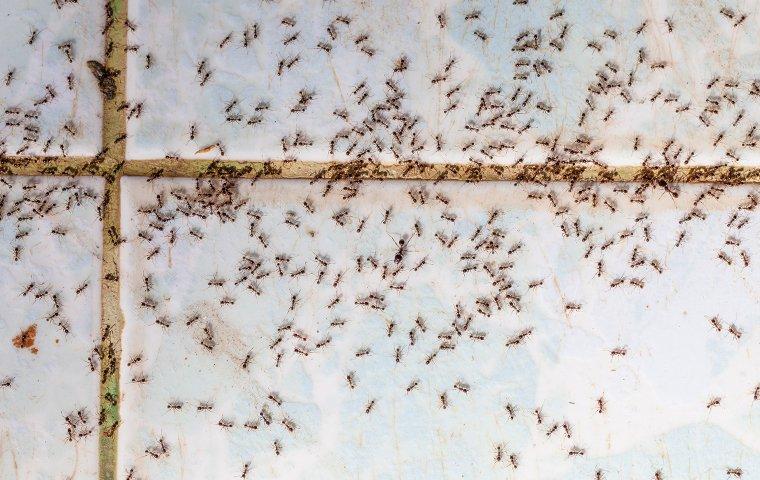ants on a kitchen floor