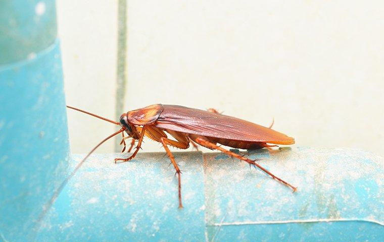 a cockroach crawling on a pipe in a home