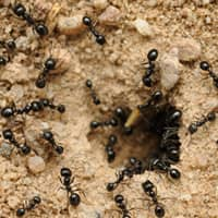 ants infesting a pennsylvania home