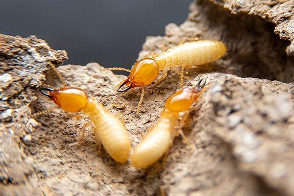 a voiding termites crawling on wood