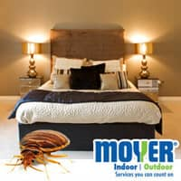 Bed Bug In Pennsylvania Bedroom