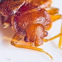 bed bug in pennsylvania