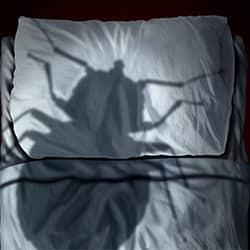 a large bed bug shaped shadow cast down onto the whit linens on a souderton residents bed