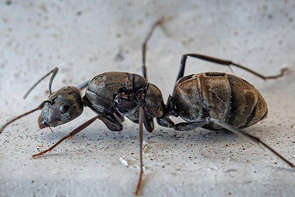 a carpenter ant on a basement floor