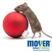 get rid of christmas mice