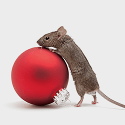 mouse with christmas bulb