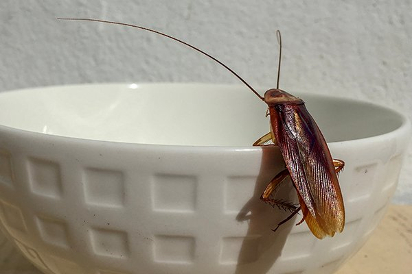 a cockroach crawling on a bowl inside of a home in new castle delaware