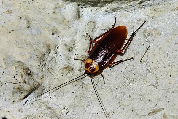 cockroach in basement