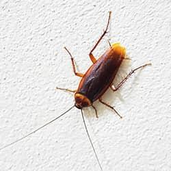 cockroach on white wall