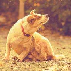 a souderton pennsylvania pet dog feverously scratching at his fleas in the backyard of a residential home