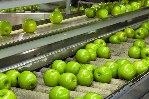 apples on a conveyor belt inside of a commercial food processing facility in west chester pennsylvania