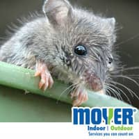 do you know the signs of mice activity?