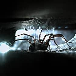 house spider lerking in the dark of a new castle home