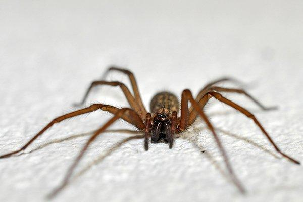 up close image of a house spider crawling on the floor