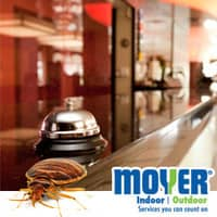 pennsylvania hotels are avoiding bed bugs with these tips from moyer indoor | outdooor