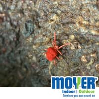 Clover Mites In PA