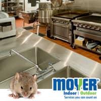 mouse infestation in a souderton restaurant
