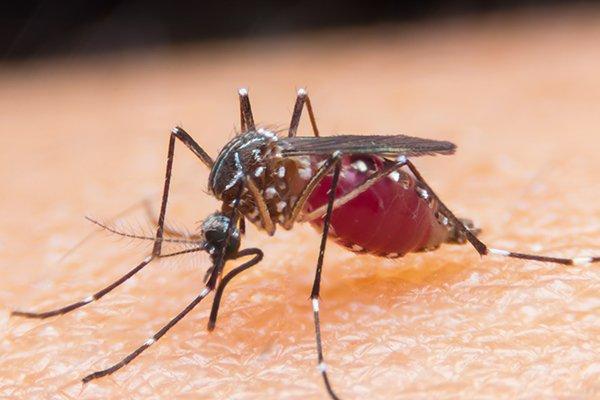 a mosquito spreading disease through it bite