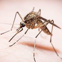 a mosquito biting a new castle deleware resident on the arm durring an early fall evening