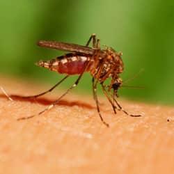 Mosquitoes Spread Diseases