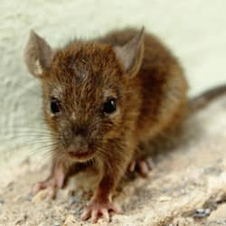mouse overwintering in telford home