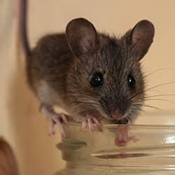 mouse on a rim of a cup