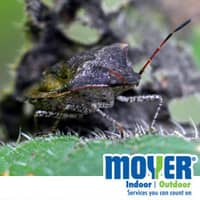 stink bug proof your home to keep stink bugs out this fall